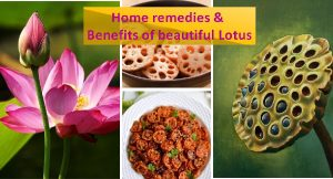Lotus benefits and remedies