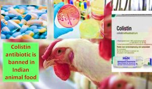Colistin ban by India