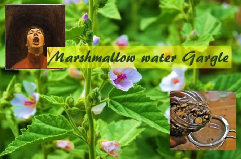 Marshmallow root for sore throat