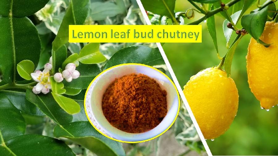 Lemon leaf bud chutney