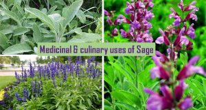 Sage home remedies