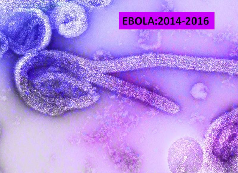 Ebola epidemic disease