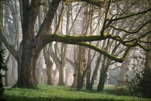 Benefits of forest bathing