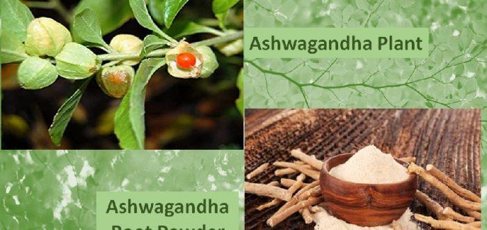 Ashwagandha Powder benefits