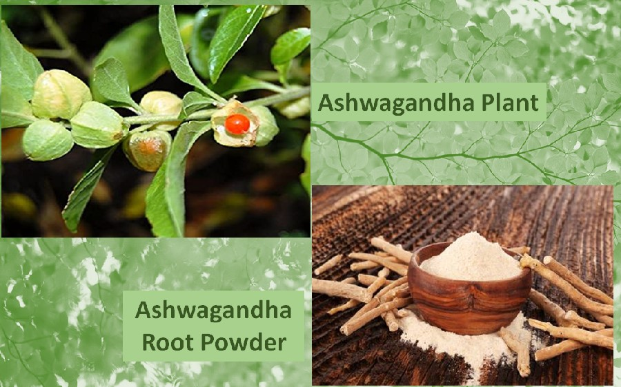 Ashwagandha Powder benefits
