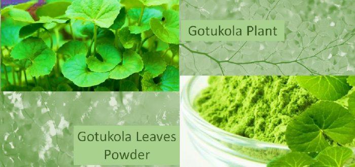 Centella gotukola powder