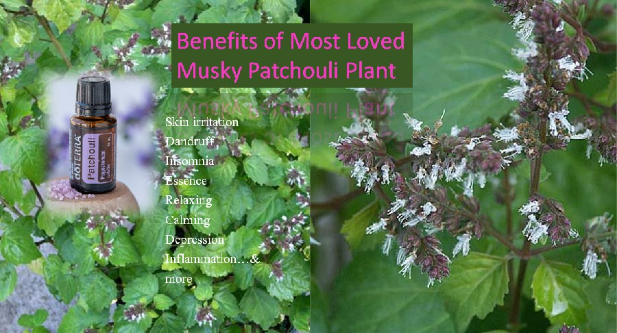Patchouli benefits