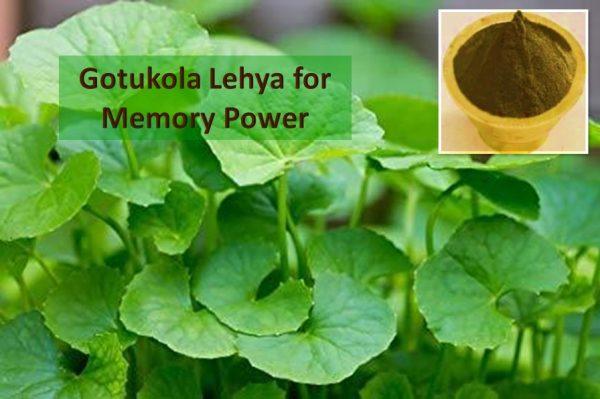 Gotukola Lehya for brain health