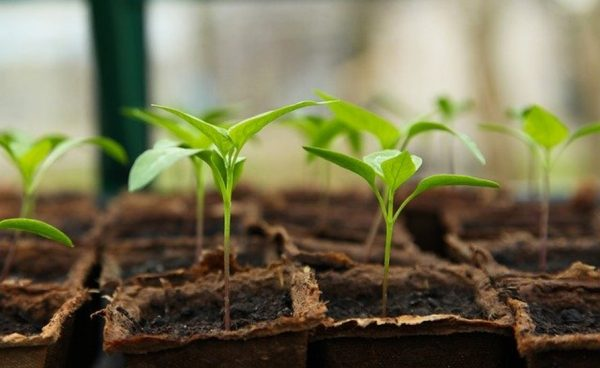 Grow plants to fight depression
