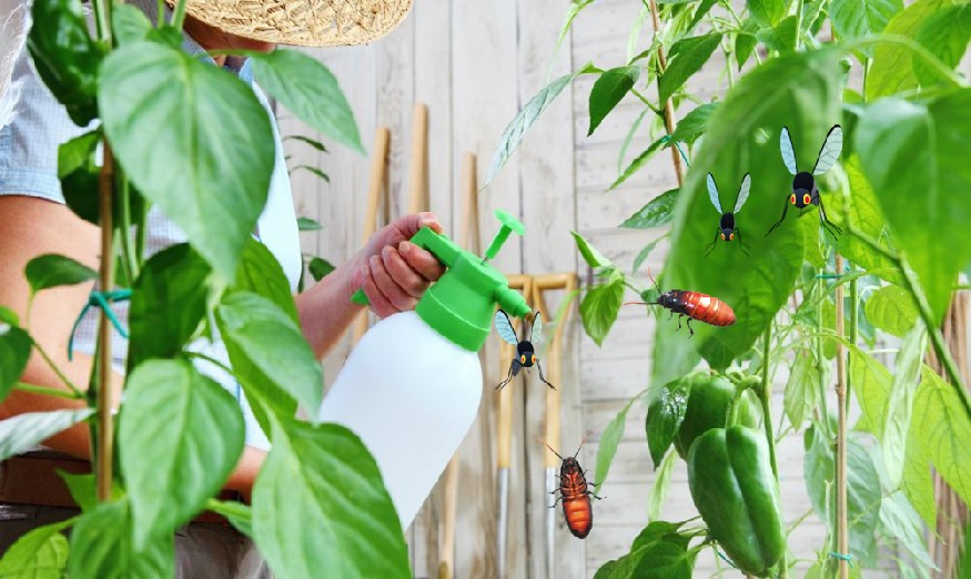 Natural DIY insecticides
