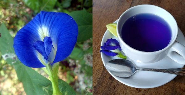 Blue tea benefits