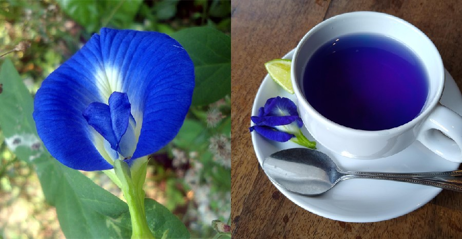 Blue tea benefits