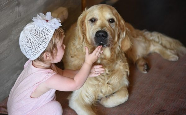 Kids and pets safety