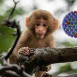 Monkey virus from China