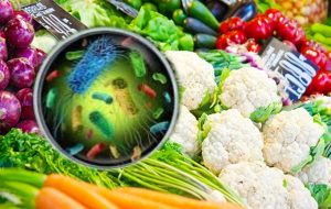 Listeria foodborne pathogen