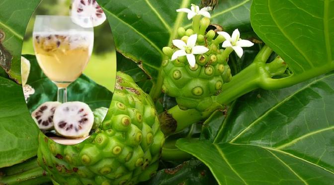 Benefits of Amrit noni juice
